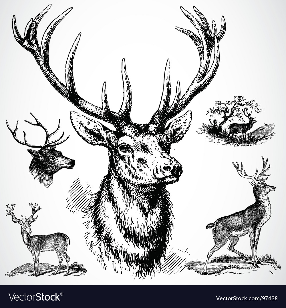 Deer ornaments vector