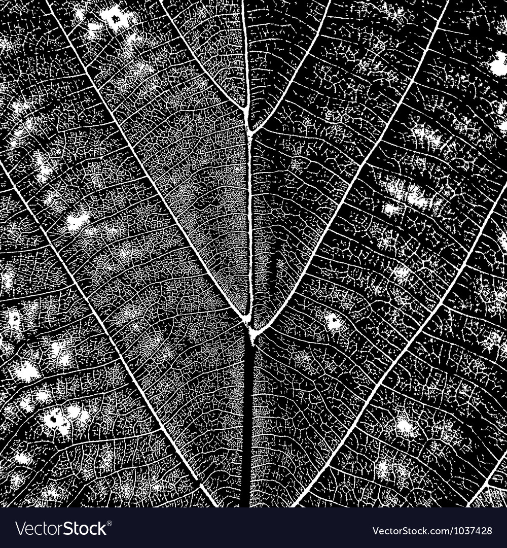 Leaf texture vector | Price: 1 Credit (USD $1)