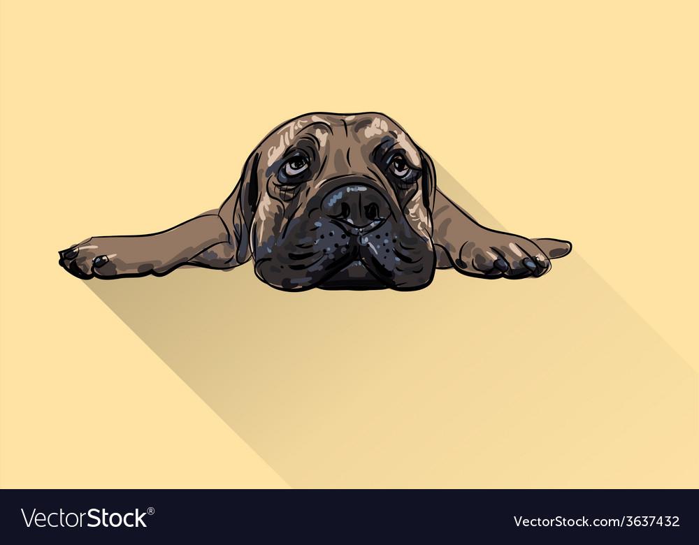 Drawing of lying bullmastiff vector | Price: 1 Credit (USD $1)