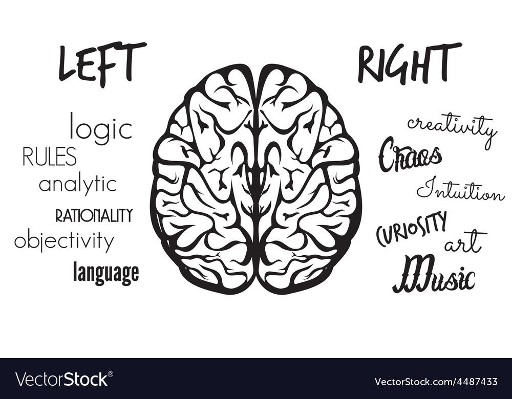 Brain dve hemisfere right left1 resize vector | Price: 1 Credit (USD $1)