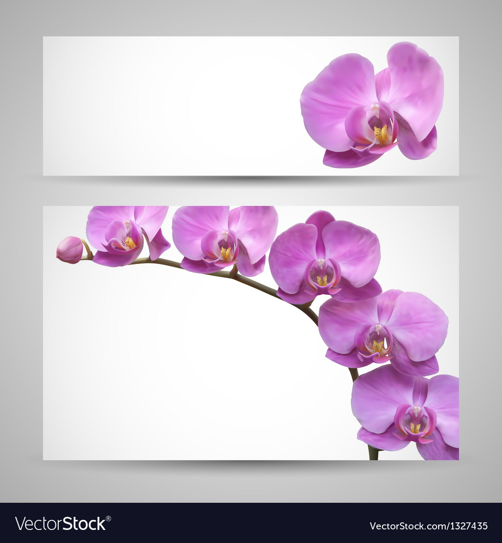 Orchid flower template vector | Price: 1 Credit (USD $1)