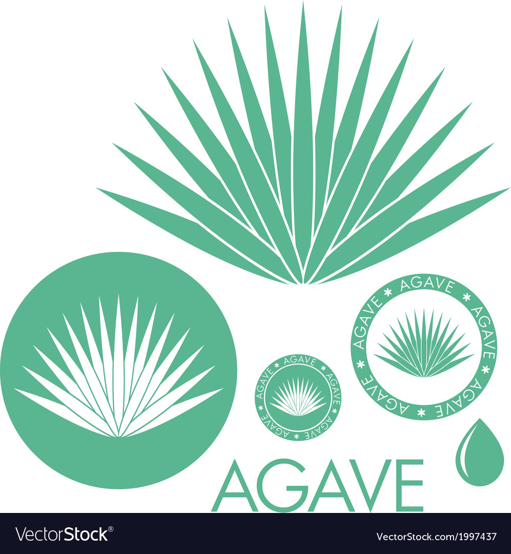 Agave vector | Price: 1 Credit (USD $1)