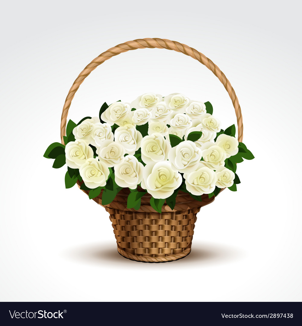Basket of white roses isolated vector | Price: 1 Credit (USD $1)
