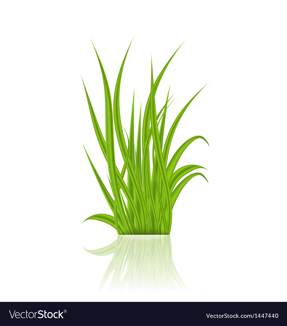 Summer green grass with reflection vector | Price: 1 Credit (USD $1)