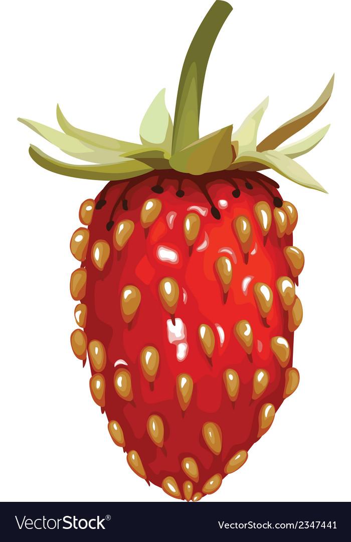 Strawberry wild vector   Price: 1 Credit (USD $1)