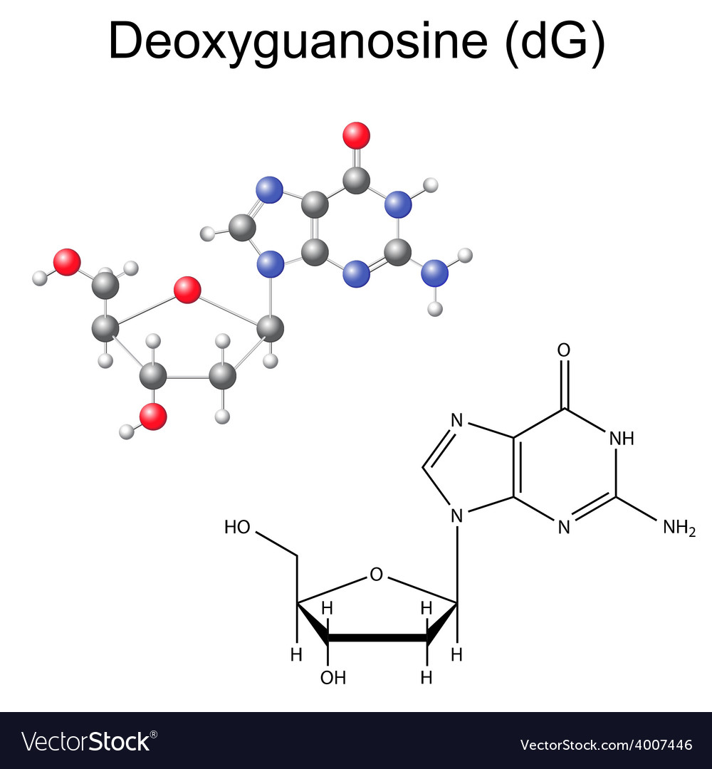 Structural chemical model of deoxyguanosine vector | Price: 1 Credit (USD $1)