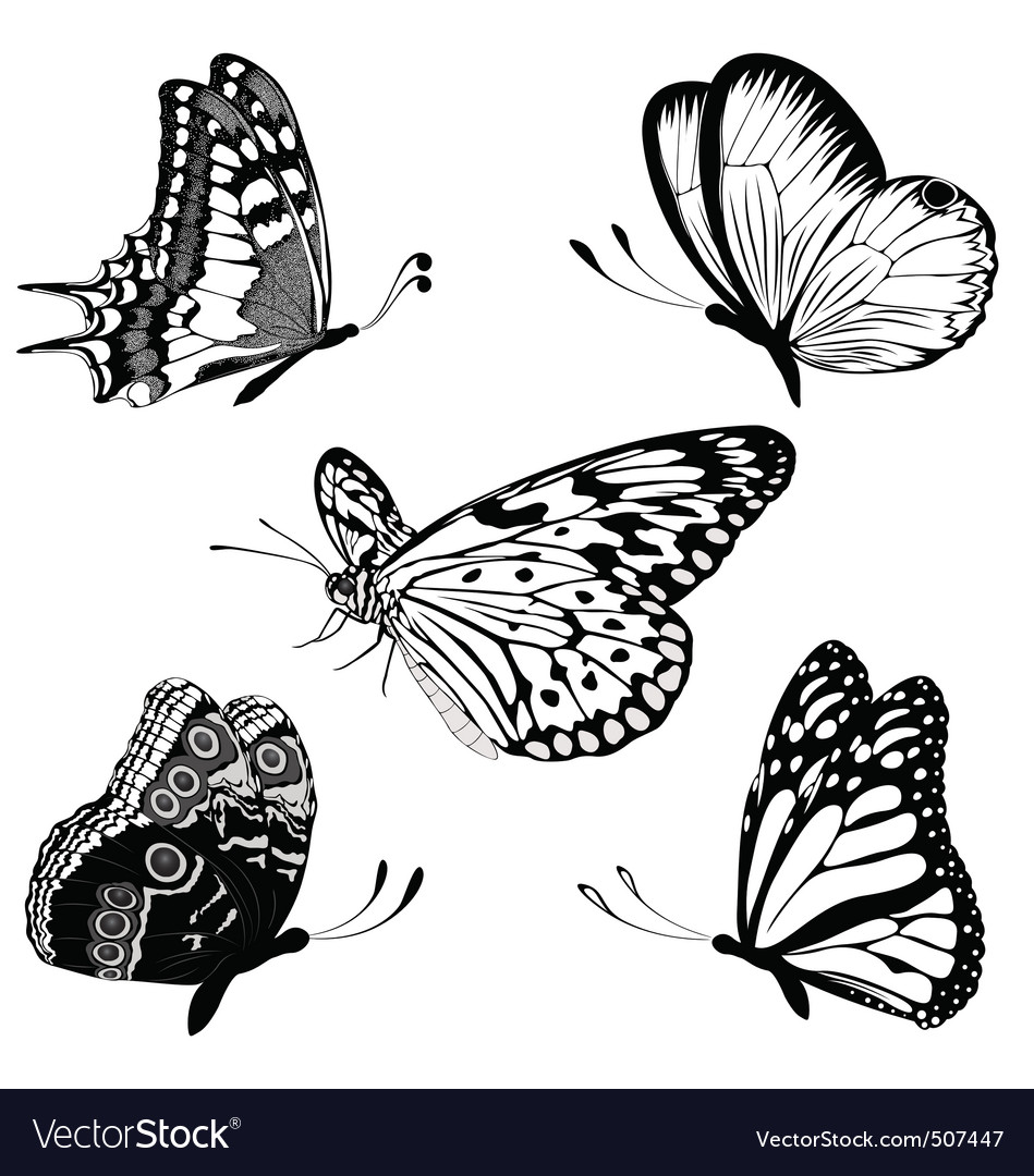 Set black white butterflies of a tattoo vector | Price: 1 Credit (USD $1)