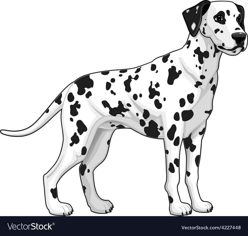 Dalmatian vector | Price: 3 Credit (USD $3)
