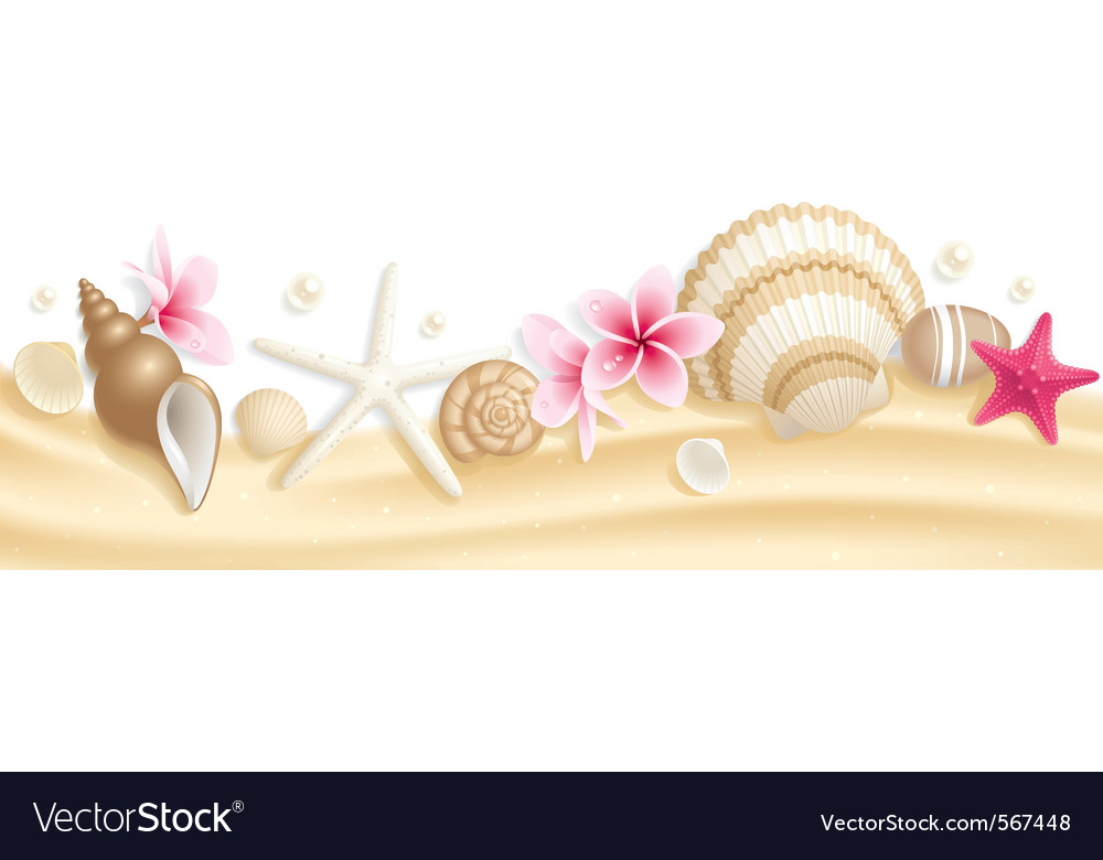 Seashell header vector | Price: 3 Credit (USD $3)