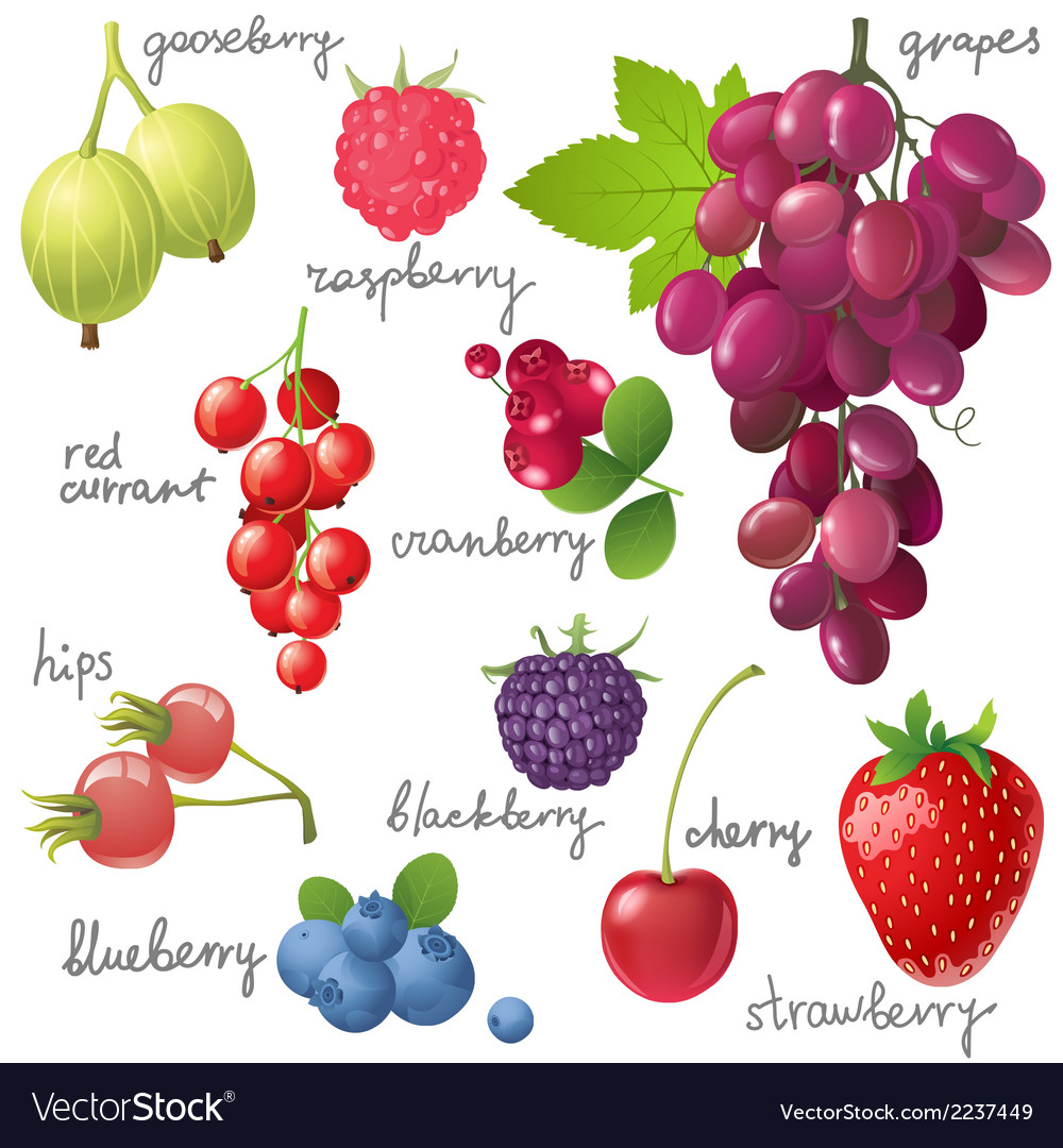 Berries set vector | Price: 1 Credit (USD $1)