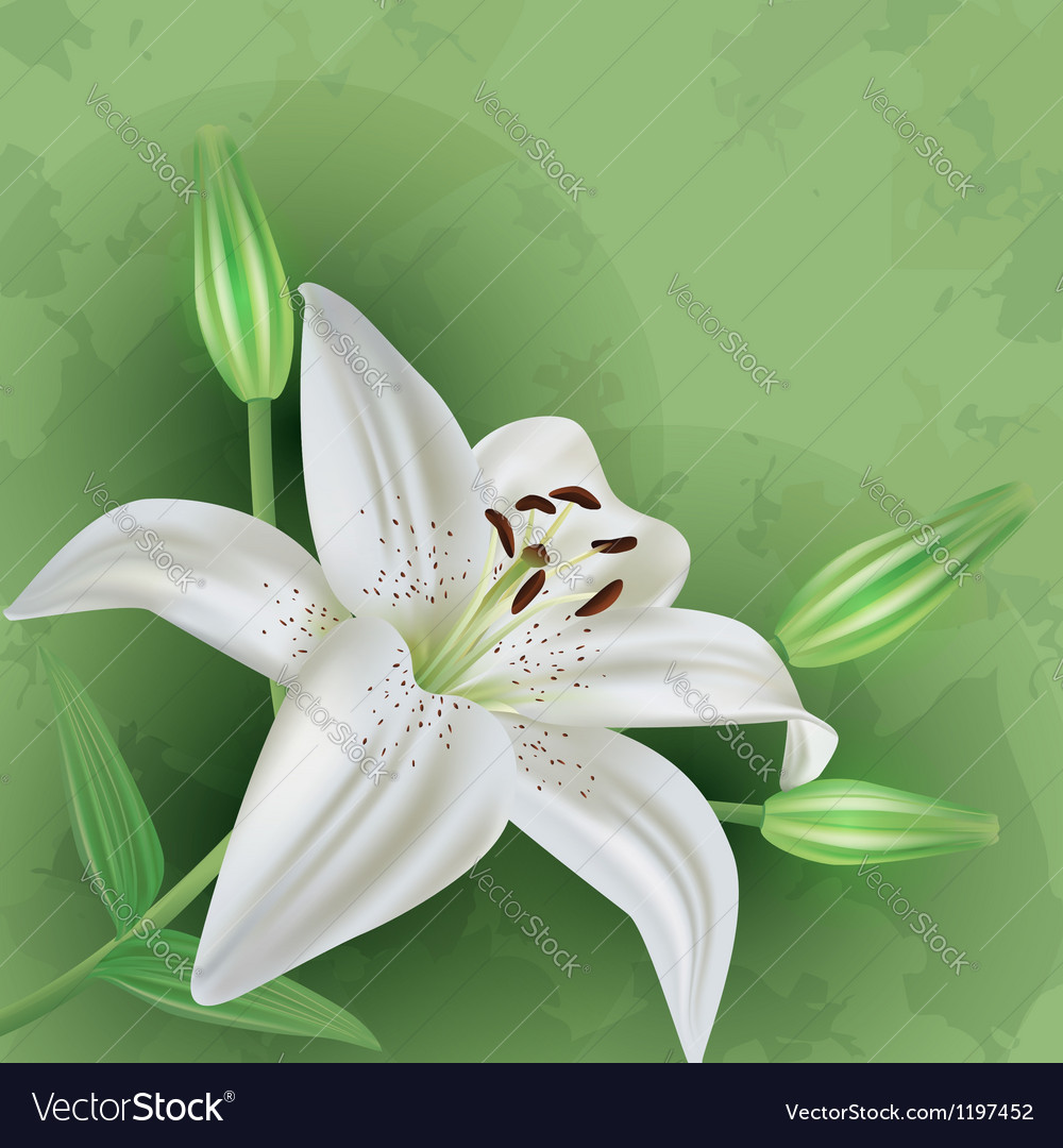 Vintage floral green background with flower lily vector | Price: 1 Credit (USD $1)
