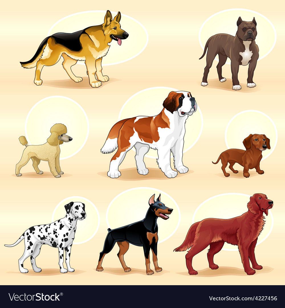 Groups of dog vector | Price: 3 Credit (USD $3)