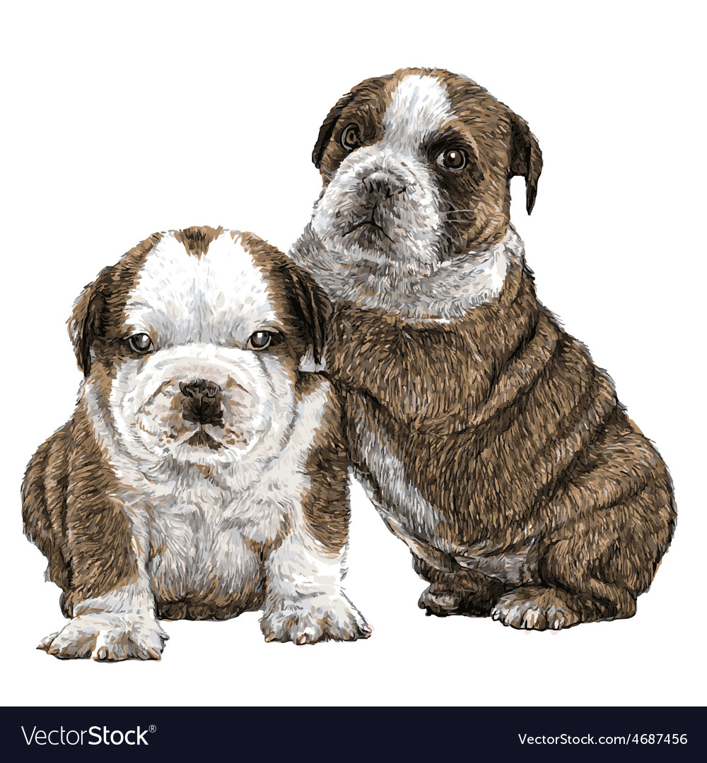 Puppy bulldogs 01 vector | Price: 3 Credit (USD $3)