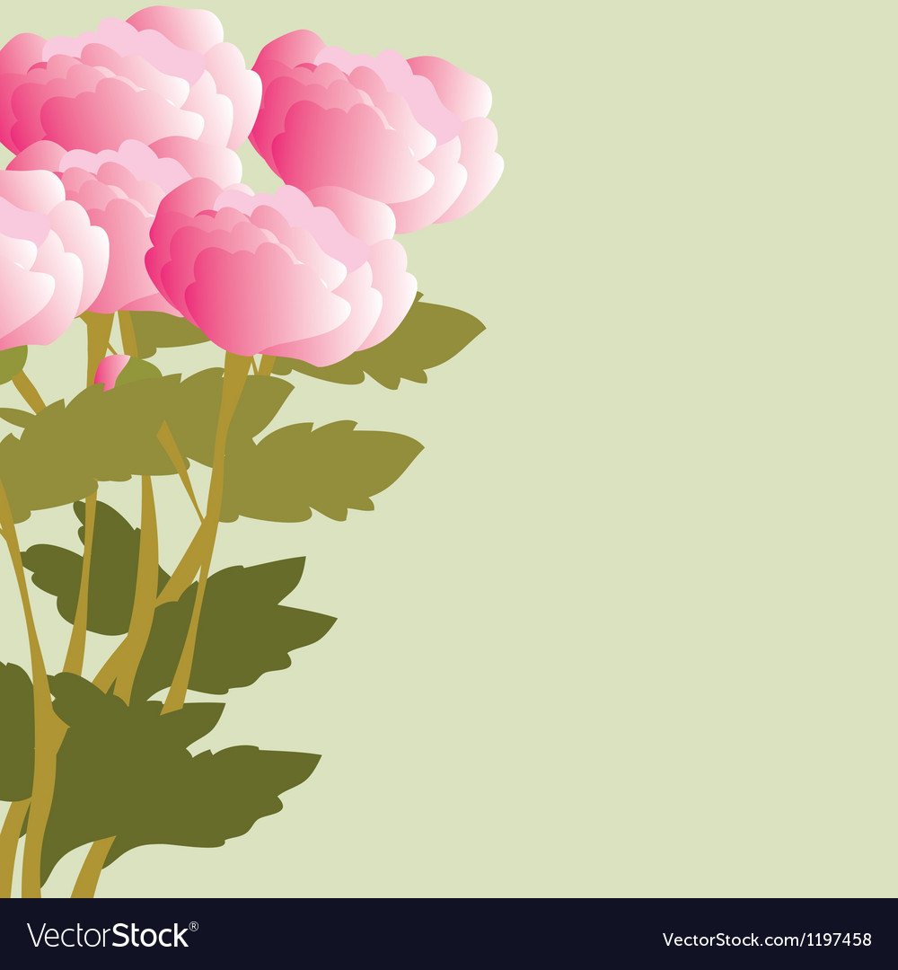 Peonies bouquet vector | Price: 1 Credit (USD $1)