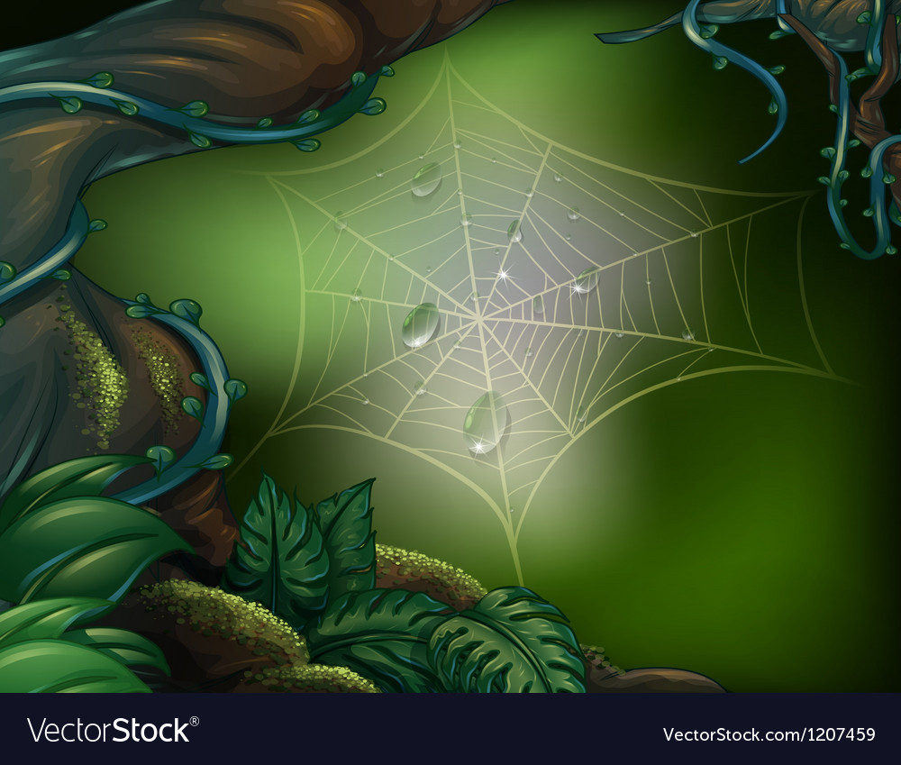 A spider web in a rainforest vector | Price: 1 Credit (USD $1)
