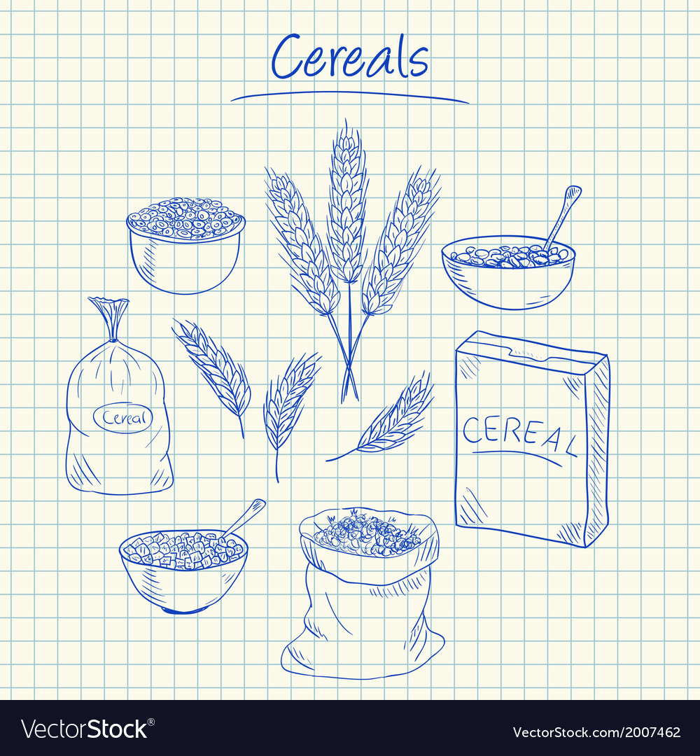 Cereals doodles squared paper vector | Price: 1 Credit (USD $1)