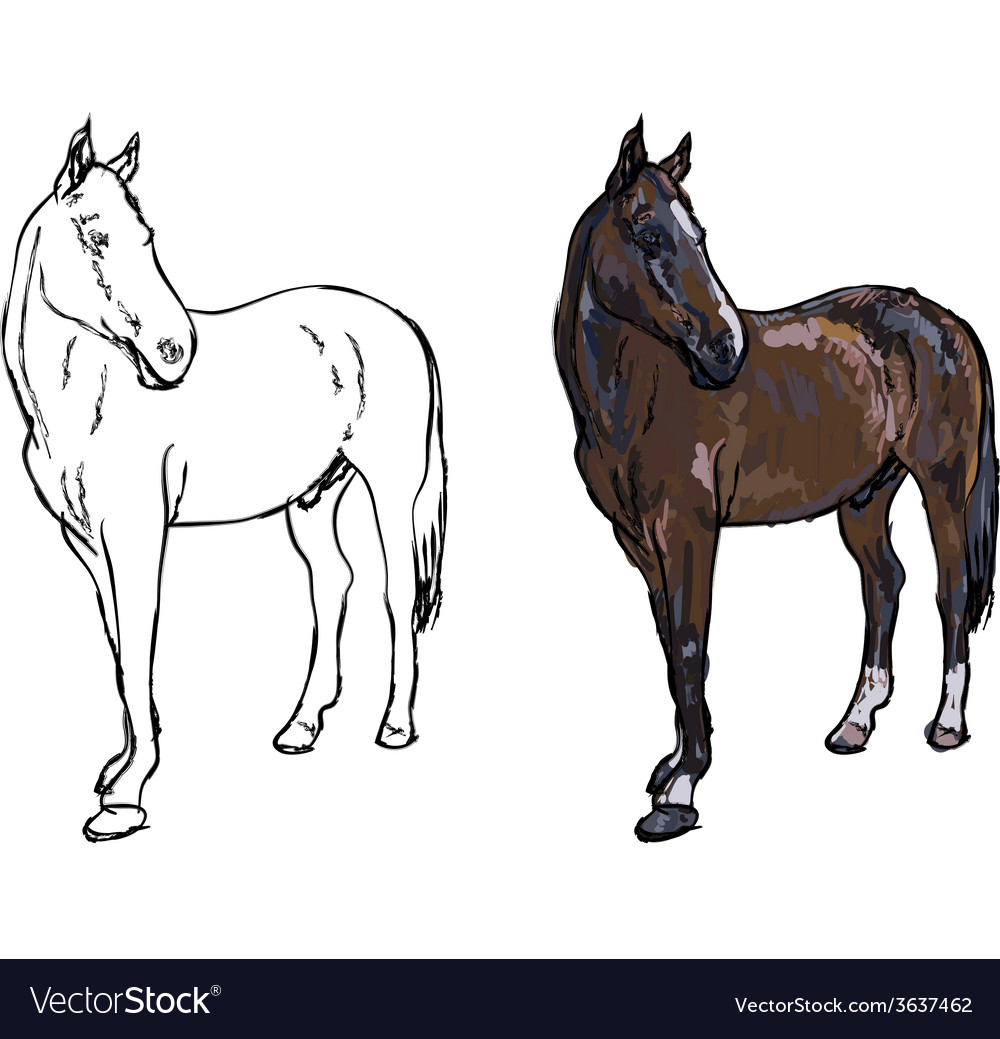 Elegance horse on white background vector   Price: 1 Credit (USD $1)