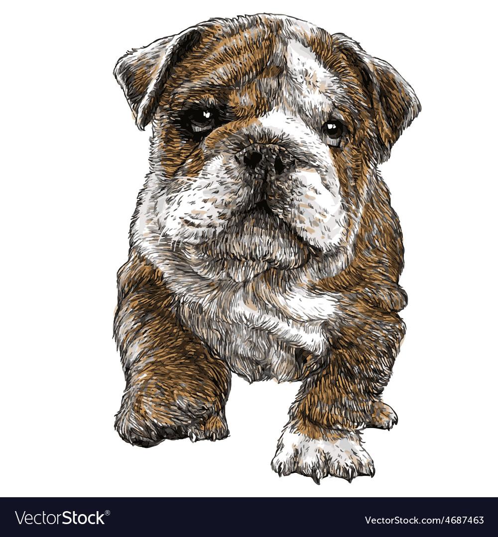 Puppy bulldogs 03 vector | Price: 3 Credit (USD $3)