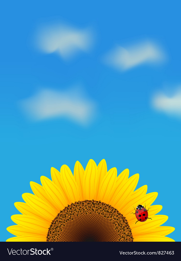 Sunflower and ladybird vector | Price: 1 Credit (USD $1)