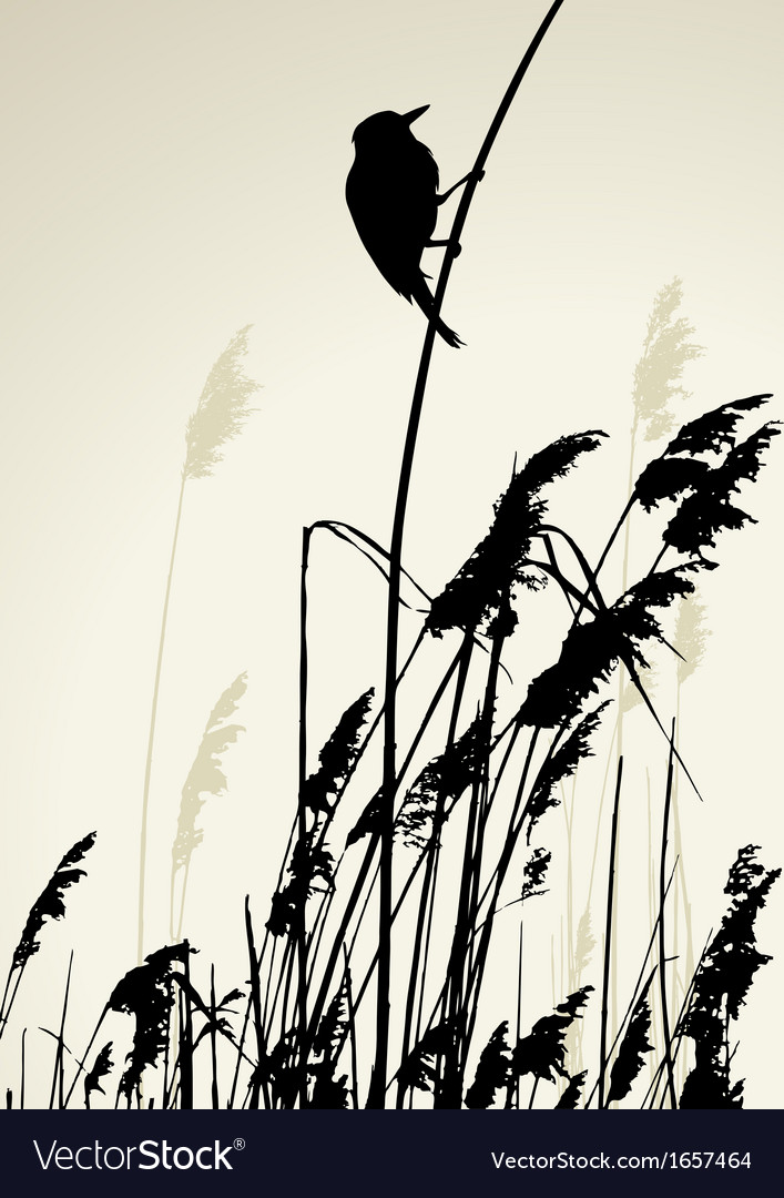 A bird sitting on reed during the summer day vector | Price: 1 Credit (USD $1)