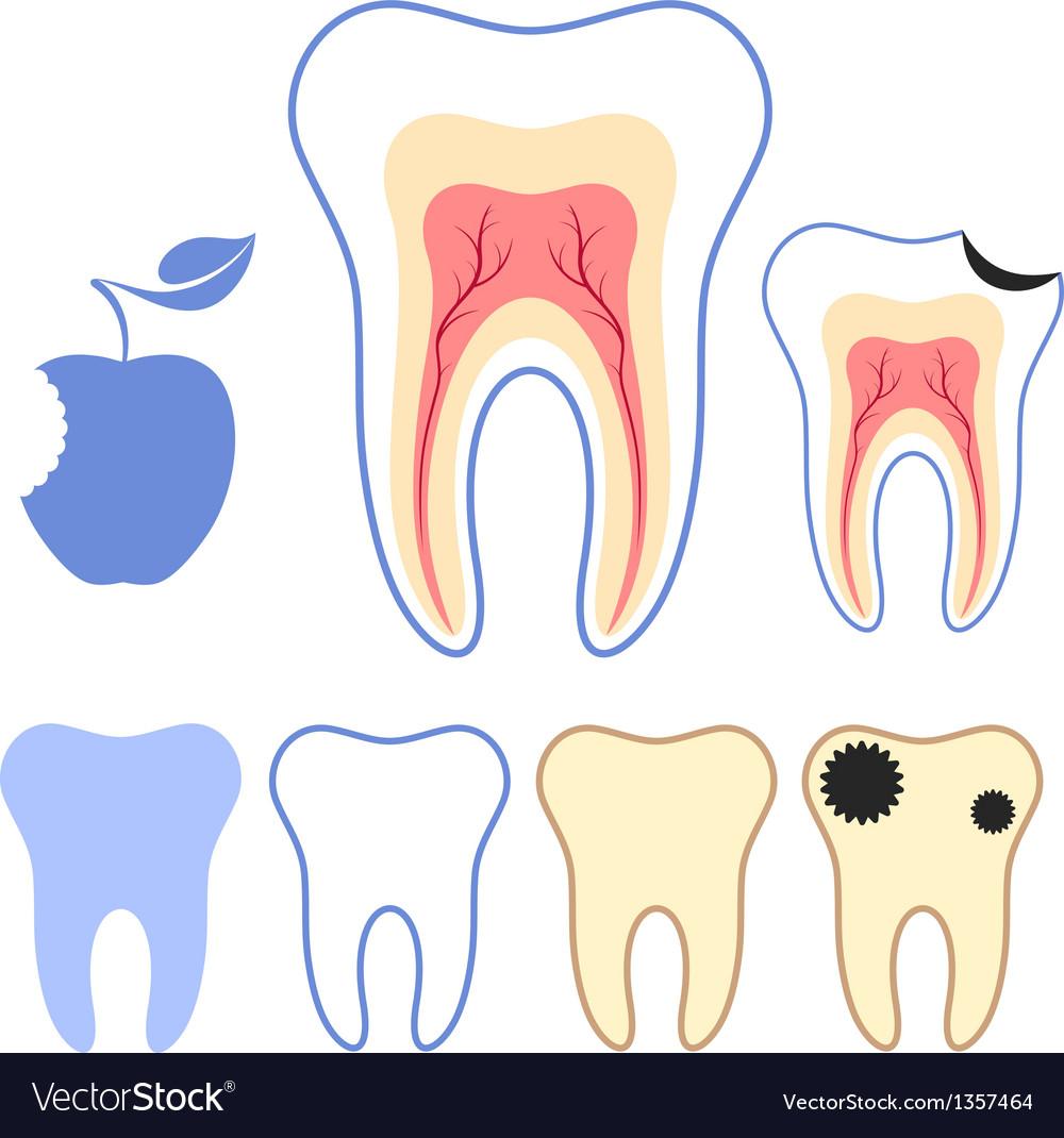 Human teeth vector | Price: 1 Credit (USD $1)
