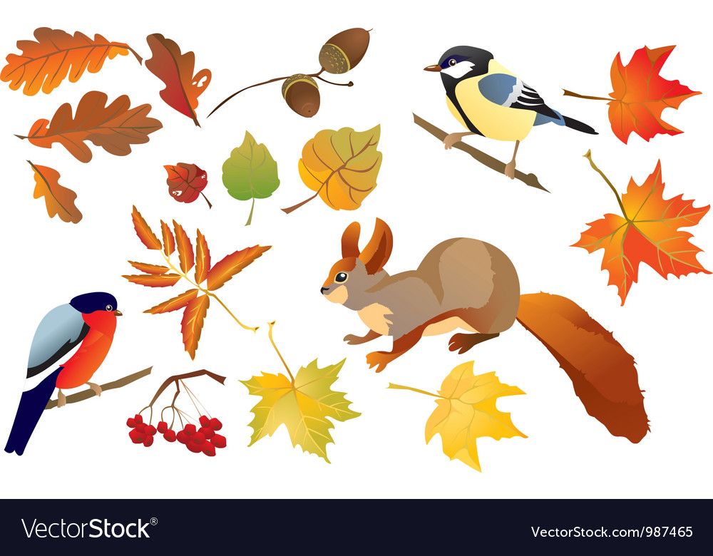 Set of isolated autumn forest leafs vector   Price: 1 Credit (USD $1)