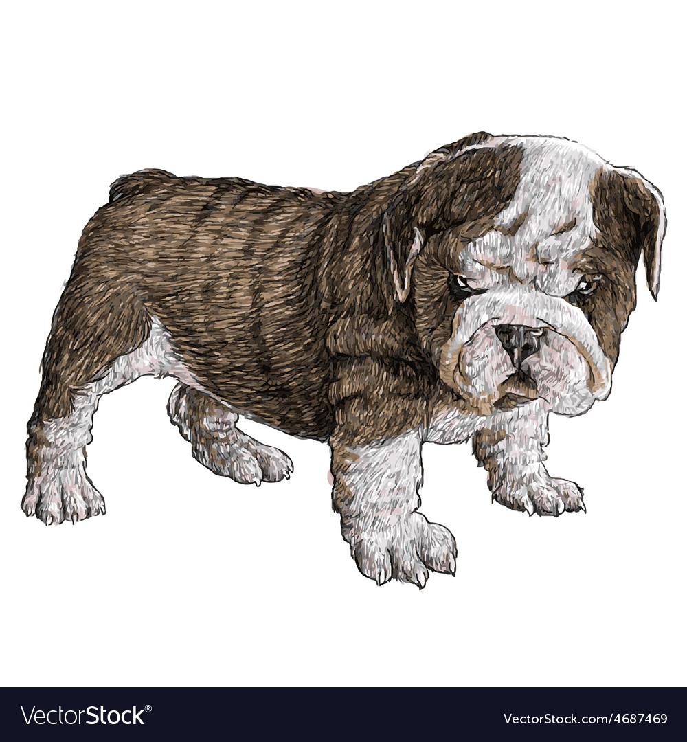 Puppy bulldogs 05 vector | Price: 3 Credit (USD $3)