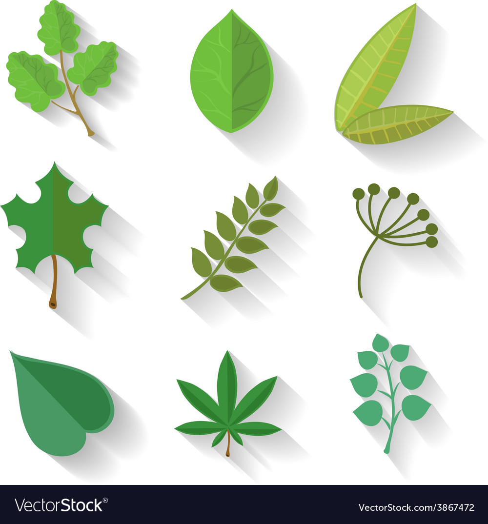 Set of leaves various trees isolated green leave vector | Price: 1 Credit (USD $1)