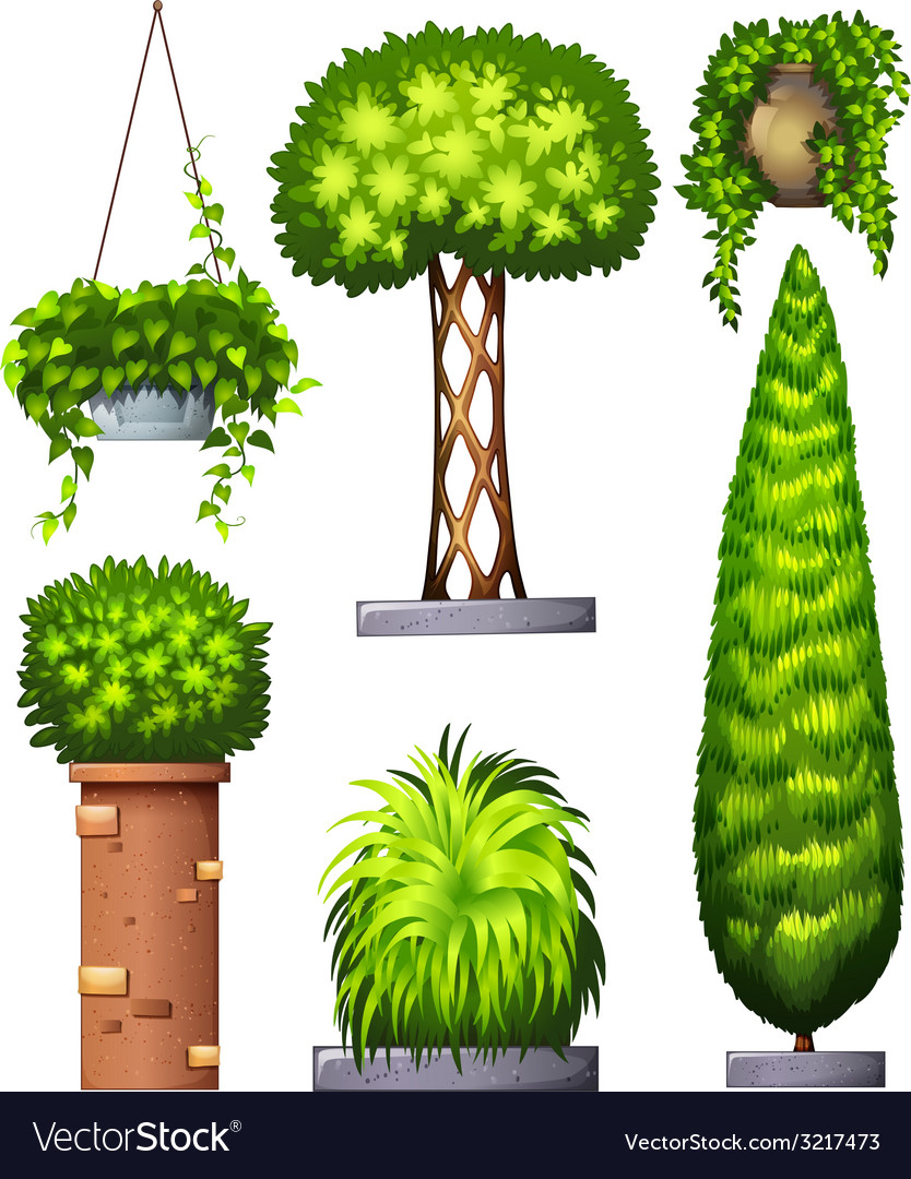 Different decorative plants vector | Price: 1 Credit (USD $1)