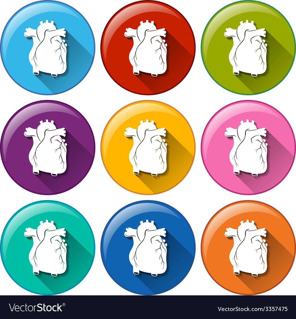 Buttons with heart organs vector | Price: 1 Credit (USD $1)