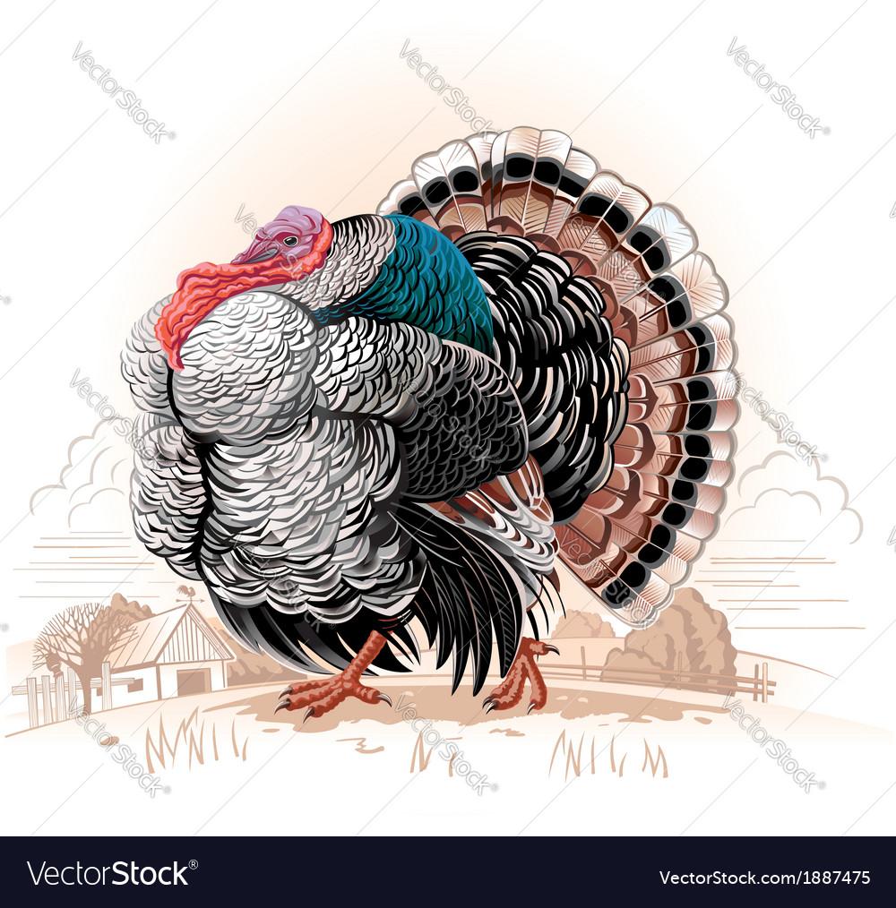 Turkey vector | Price: 3 Credit (USD $3)