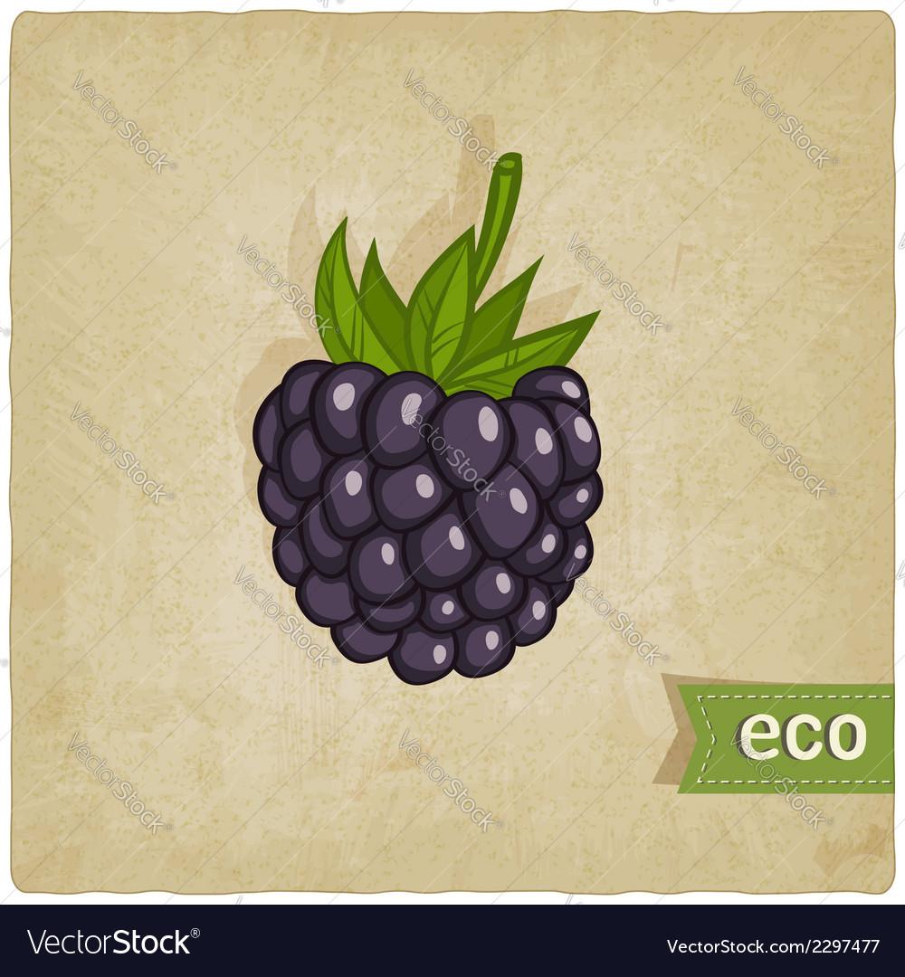 Blackberry eco background vector   Price: 1 Credit (USD $1)