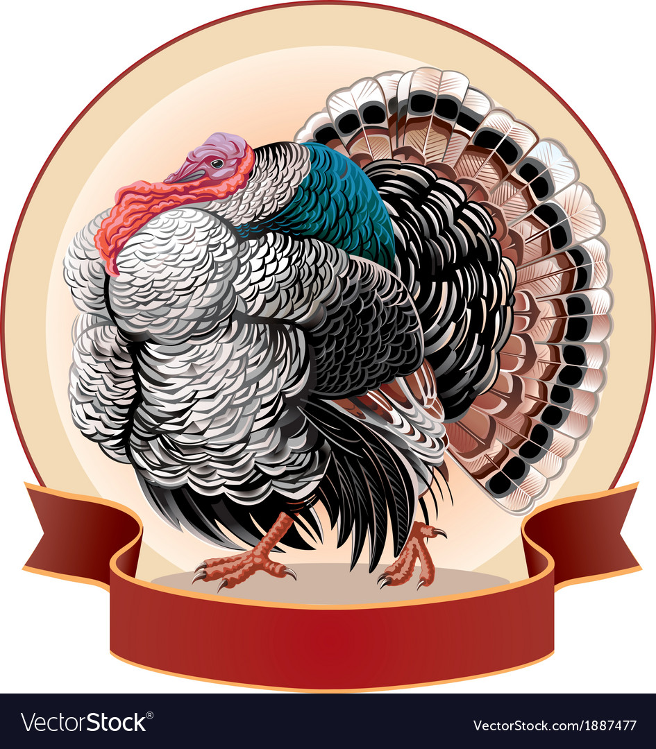 Graphical turkey-cock vector | Price: 3 Credit (USD $3)