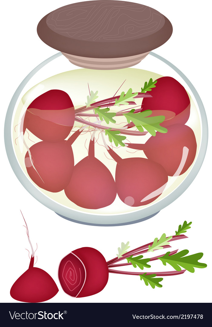 Jar of pickled radishes or beets with malt vinegar vector | Price: 1 Credit (USD $1)