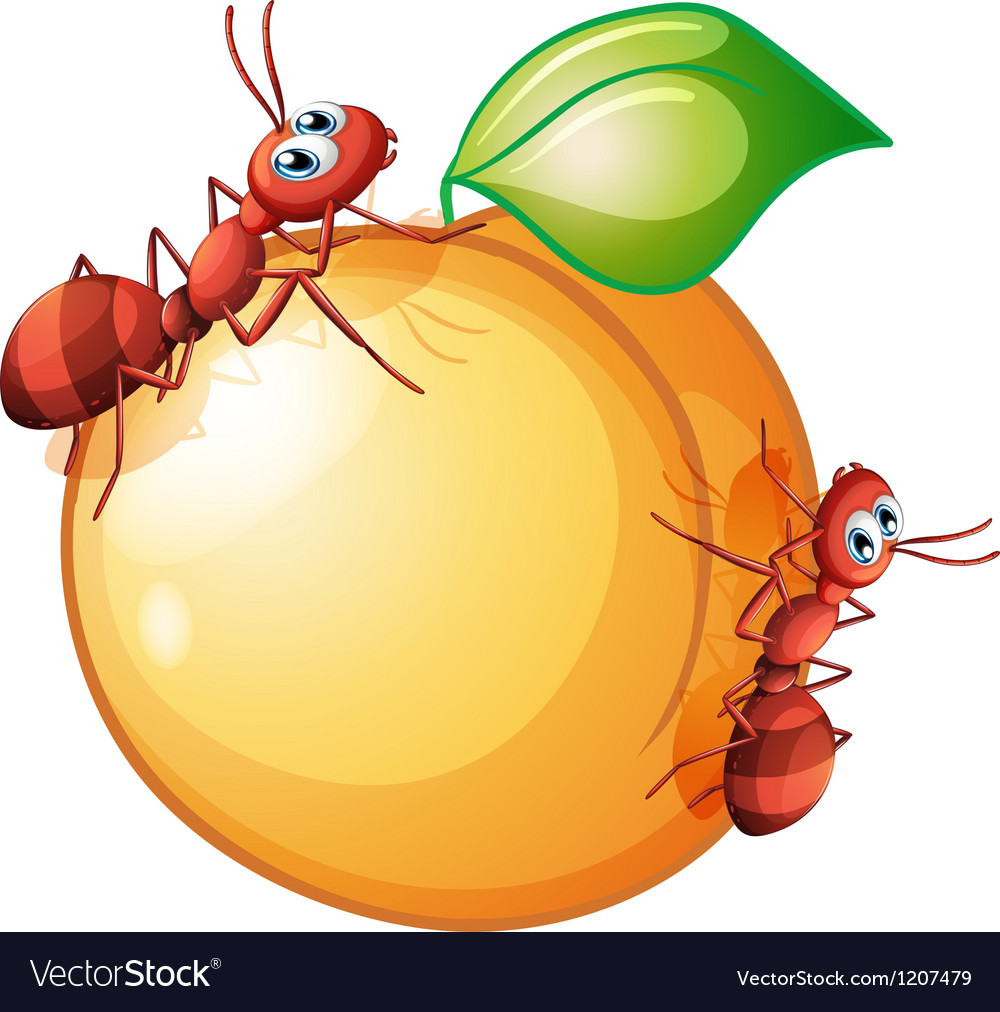 A fruit with two ants vector | Price: 1 Credit (USD $1)