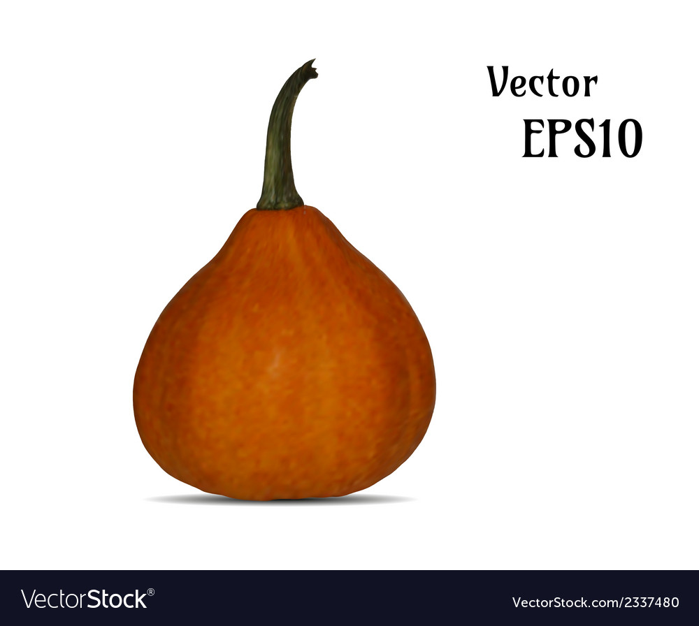 Realistic pumpkin vector | Price: 1 Credit (USD $1)