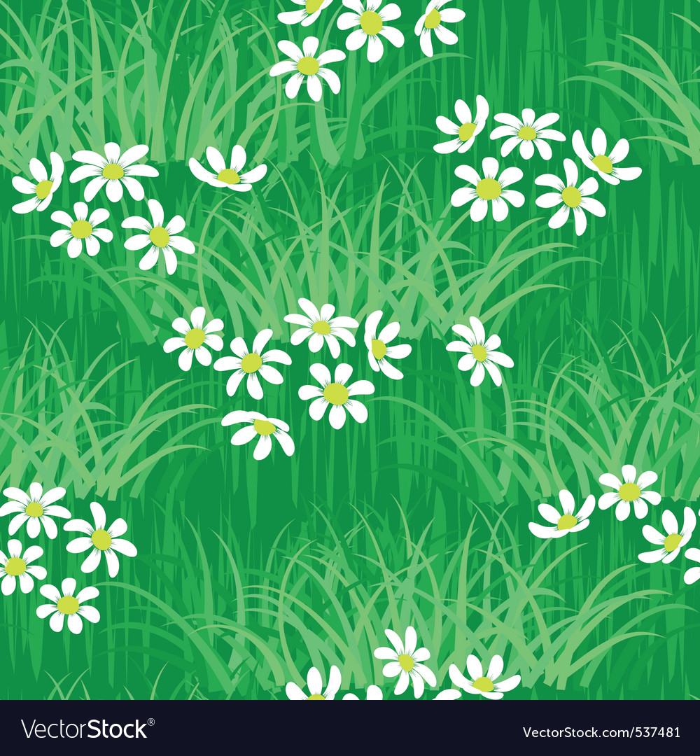 Camomile field seamless background vector | Price: 1 Credit (USD $1)