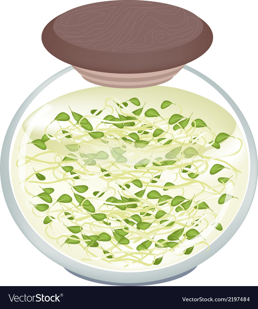 Delicious pickled beans sprouts in a jar vector | Price: 1 Credit (USD $1)