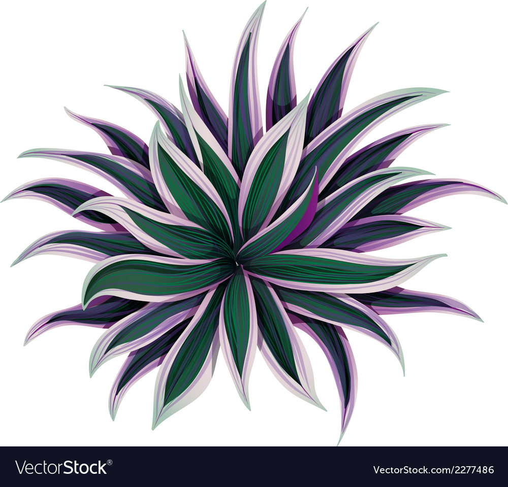 A topview of a variegated moses vector | Price: 1 Credit (USD $1)