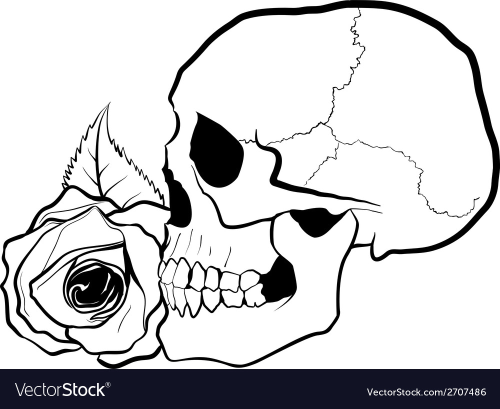 Skull with rose vector | Price: 1 Credit (USD $1)