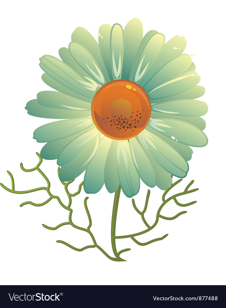 Camomile vector | Price: 1 Credit (USD $1)