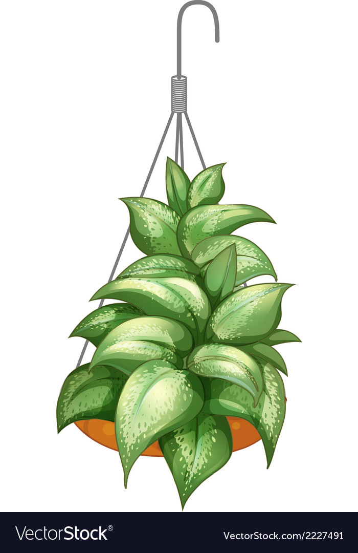 A pot with a hanging plant vector | Price: 1 Credit (USD $1)