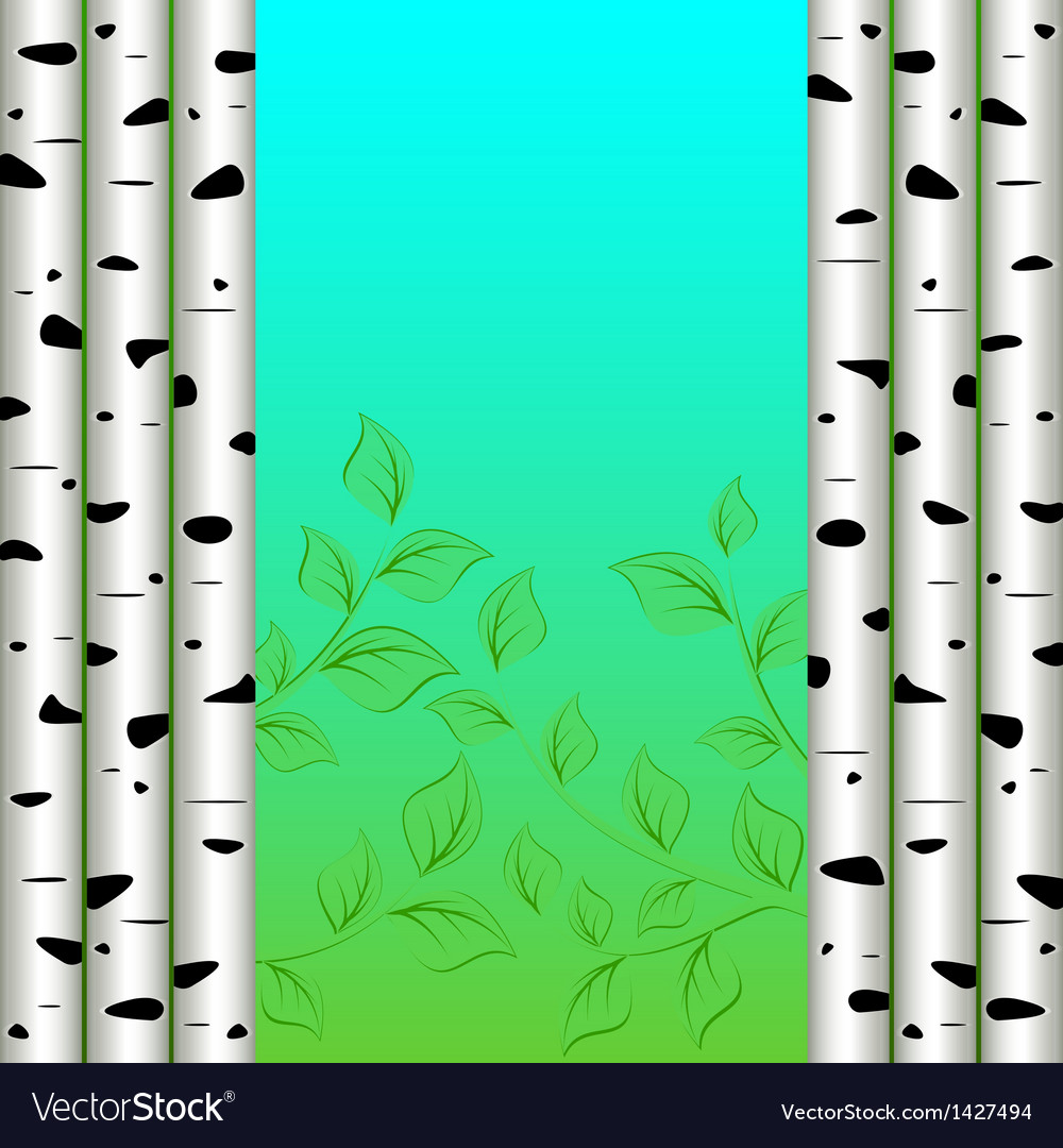 Birch background vector | Price: 1 Credit (USD $1)