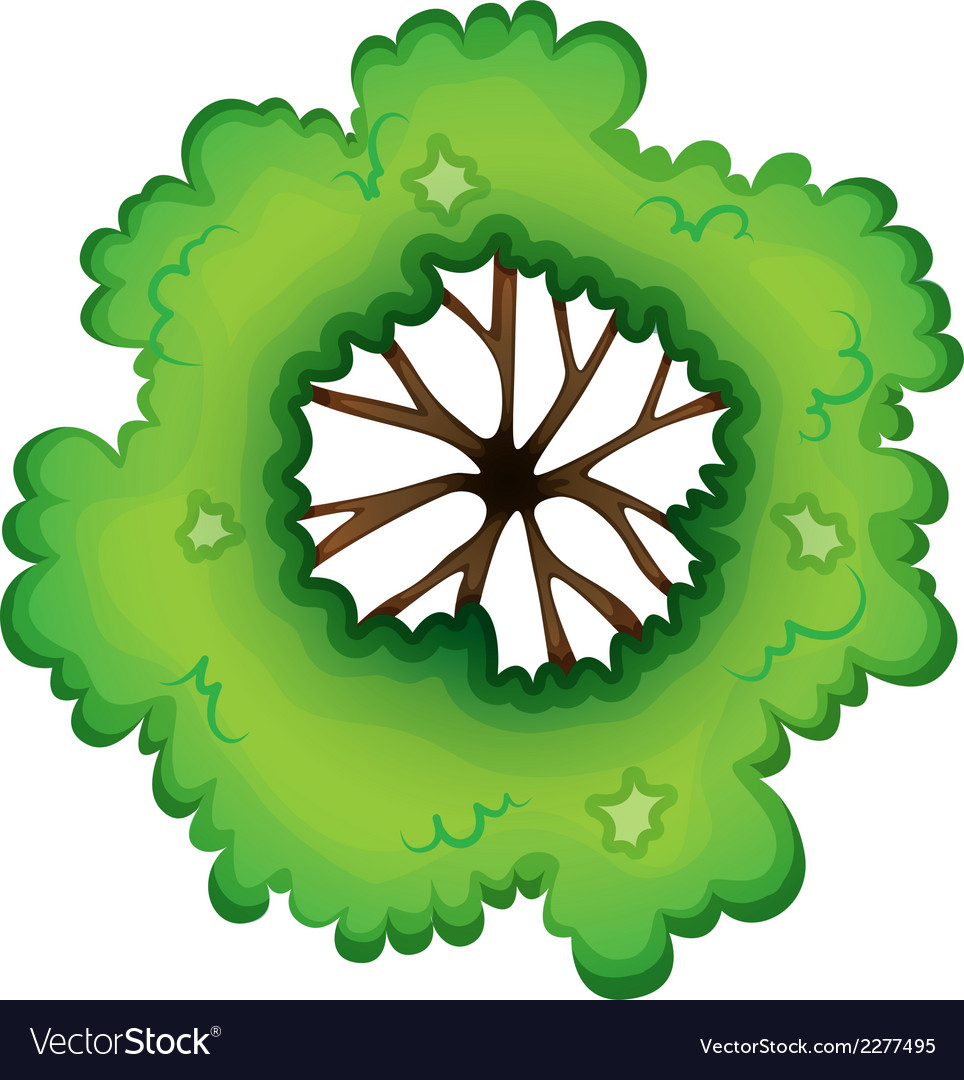 A birdeye view of a green plant vector   Price: 1 Credit (USD $1)