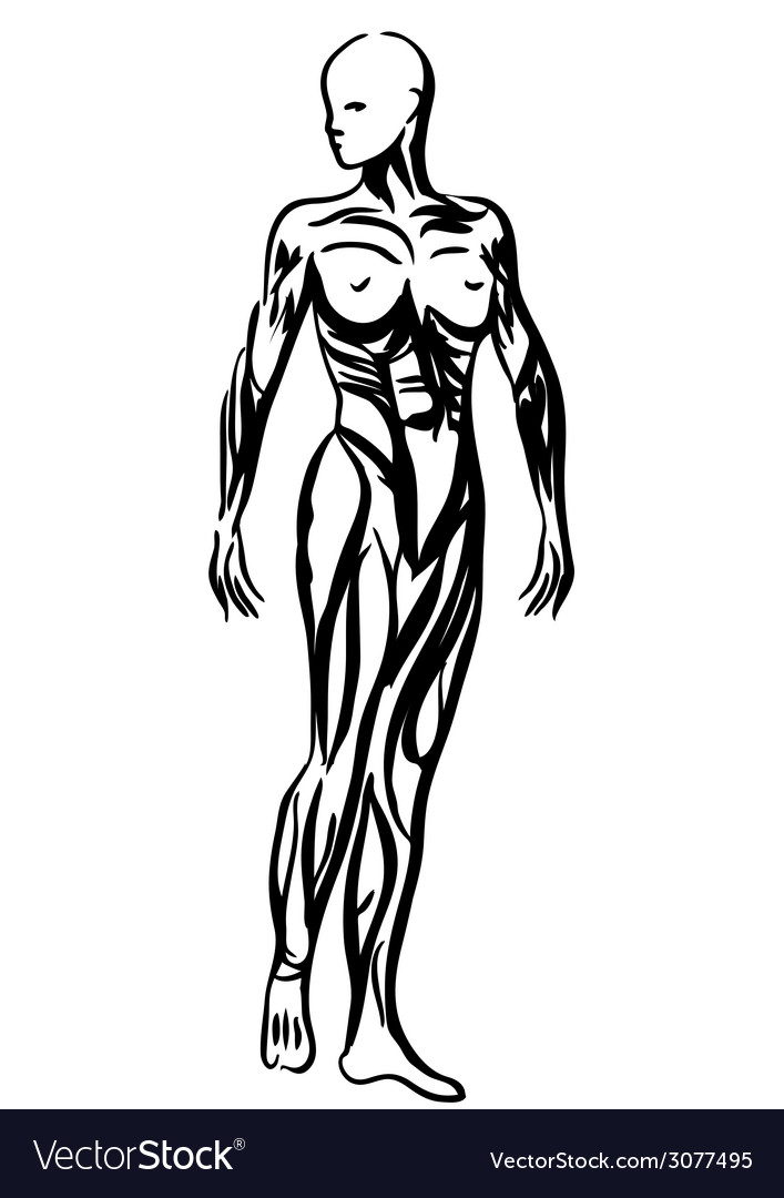 Human body anatomy woman vector | Price: 1 Credit (USD $1)