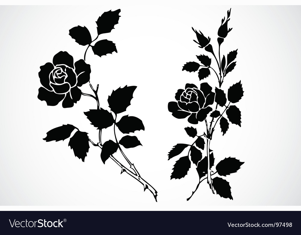 Rose stem ornaments vector | Price: 1 Credit (USD $1)