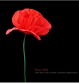Poppy flower isolated on black background vector