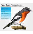 Flame robin vector