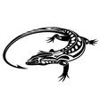 Black iguana lizard vector