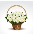 Basket of white roses isolated vector